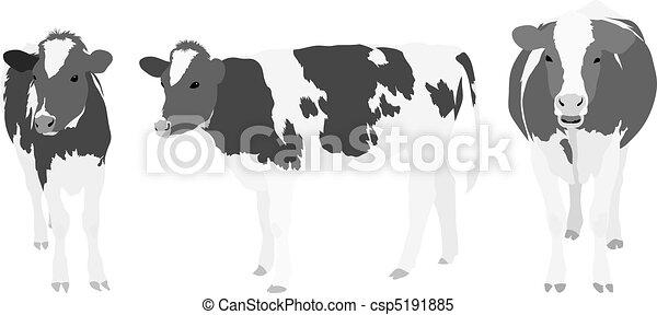 greyscale, krowy, trzy - csp5191885