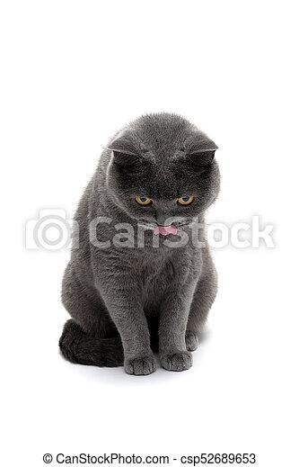 Gato gris aislado en el fondo blanco - csp52689653