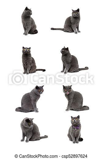 Gato gris aislado en el fondo blanco - csp52897624