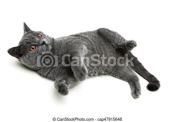 Un gatito gris en un primer plano de fondo blanco - csp47915648