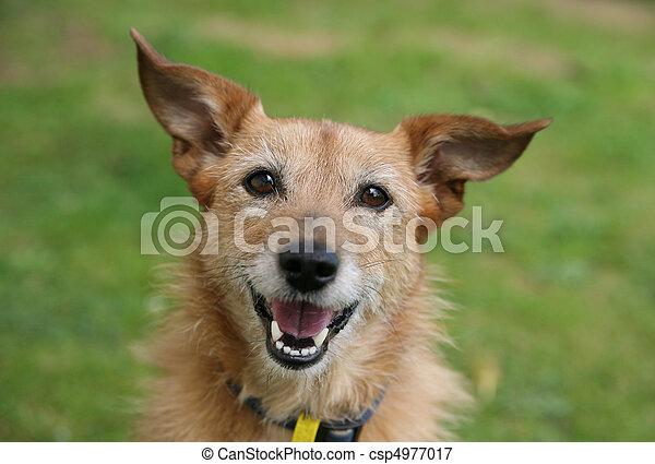 Hund mit einem großen Lächeln - csp4977017