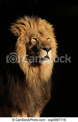 groß, löwe, mann, afrikanisch - csp0997116
