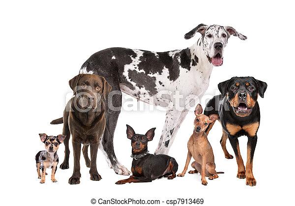 große gruppe, hunden - csp7913469