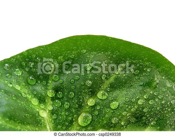groen blad, helft - csp0249338