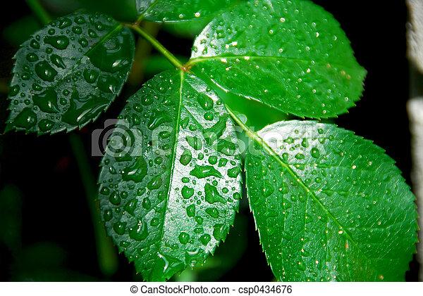groen blad, nat - csp0434676