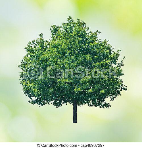 groen boom - csp48907297