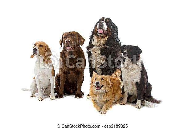 groep, honden - csp3189325