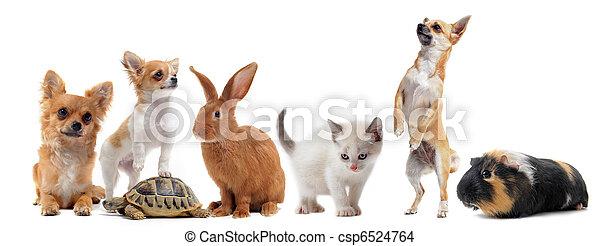 groep, huisdieren - csp6524764
