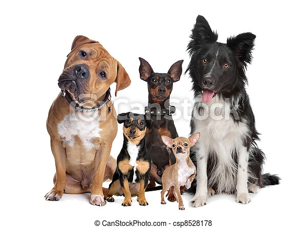 groep, vijf, honden - csp8528178