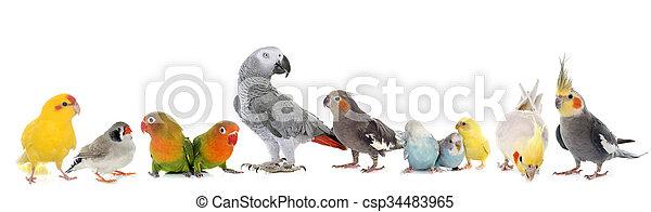 groep, vogels - csp34483965