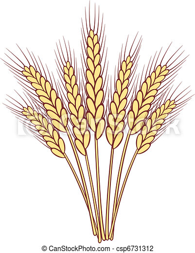 grono, wektor, pszenica, kłosie - csp6731312