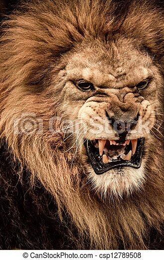 gros plan rugir coup lion photographie de stock
