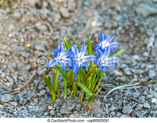 ground., flores azules, violetas, bosque - csp80825091