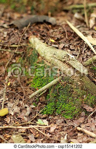 Moss en el suelo. - csp15141202