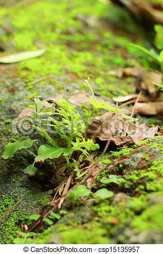 Moss en el suelo. - csp15135957