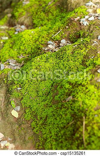 Moss en el suelo. - csp15135261