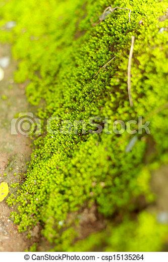 Moss en el suelo. - csp15135264
