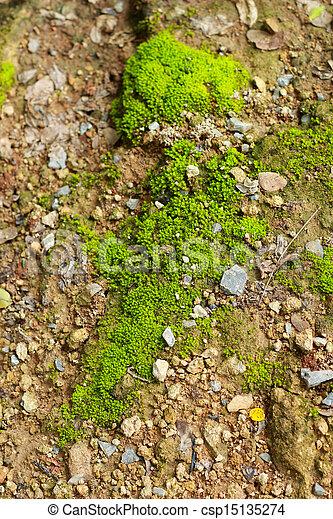 Moss en el suelo. - csp15135274
