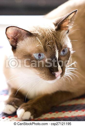 egyedülálló nők macskák
