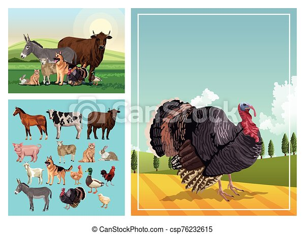 group of animals farm in the camp - csp76232615
