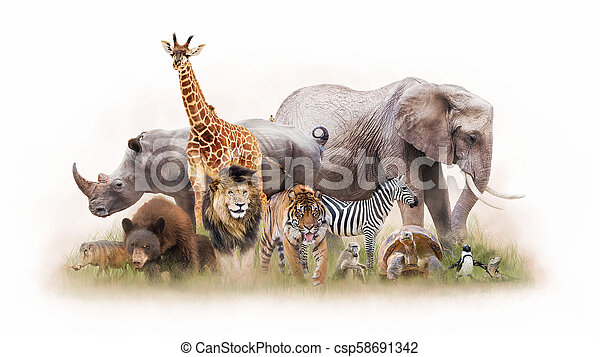 Group of wild animals together - photo#40