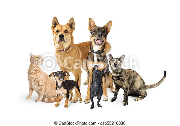 Group of Cats and Dogs Looking Up on White