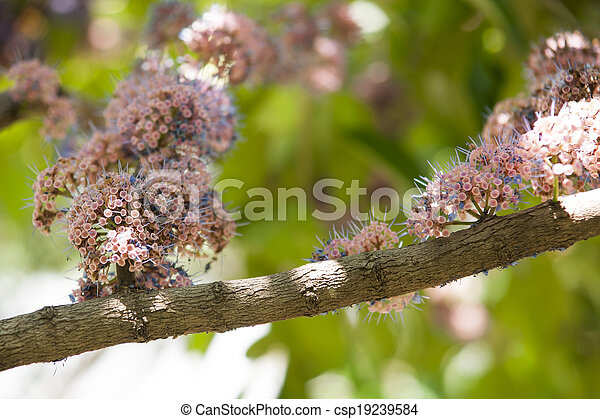 Group of colorful flowers. - csp19239584
