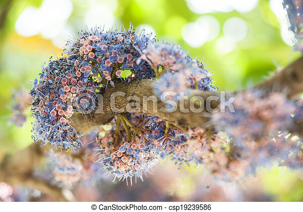 Group of colorful flowers. - csp19239586