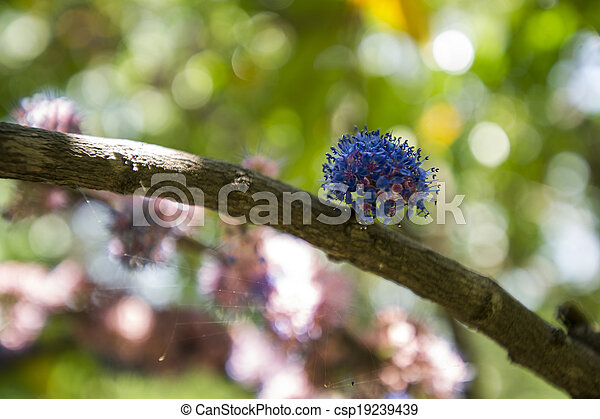 Group of colorful flowers. - csp19239439