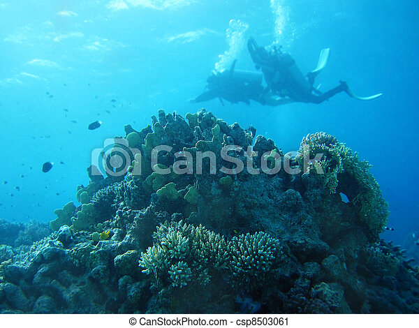 Group of coral fish in blue water. - csp8503061