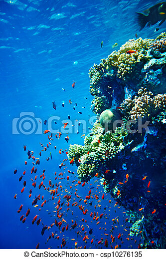 Group of coral fish in blue water. - csp10276135