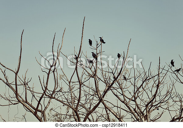 Group of crows sitting on the bare branches of a tree - csp12918411