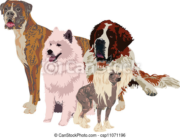group of dogs of different breeds - csp11071196