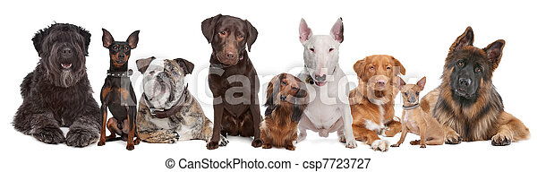 Group of Dogs - csp7723727