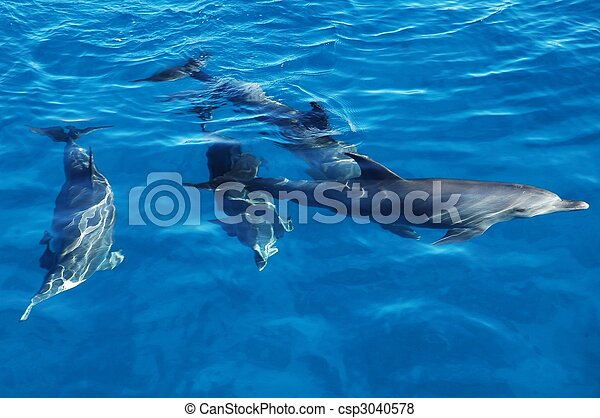 Group of dolphins in the sea - csp3040578