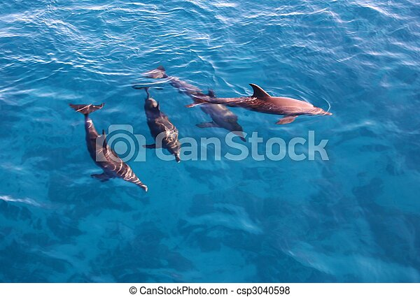Group of dolphins in the sea - csp3040598