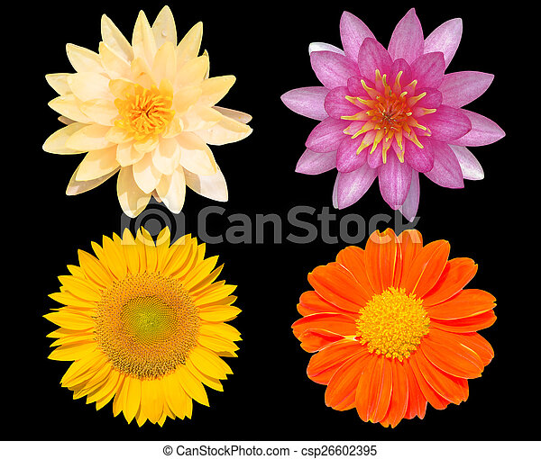 Group of flowers isolated over black background - csp26602395