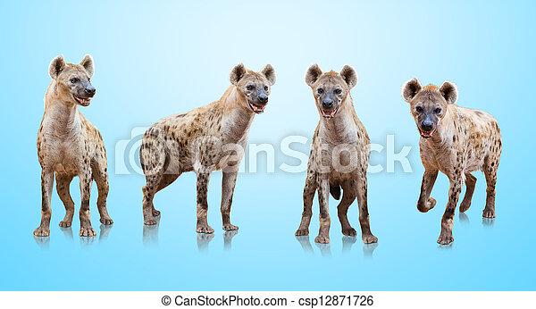 Group Of Hyenas - csp12871726
