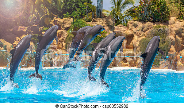 Group of jumping dolphins during show in zoo. - csp60552982