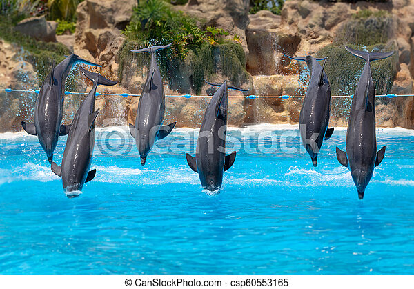 Group of jumping dolphins during show in zoo. - csp60553165