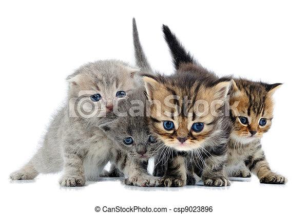 group of little kittens - csp9023896