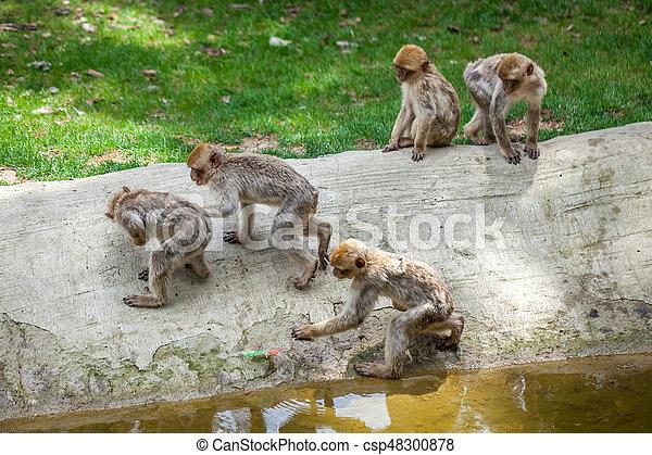 Group of monkeys - csp48300878