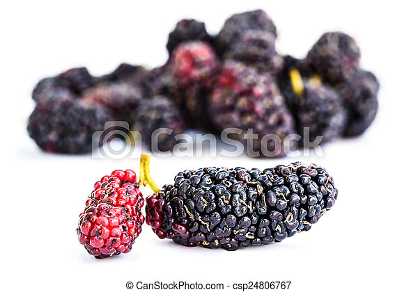 Group of mulberries isolated on a white background. - csp24806767