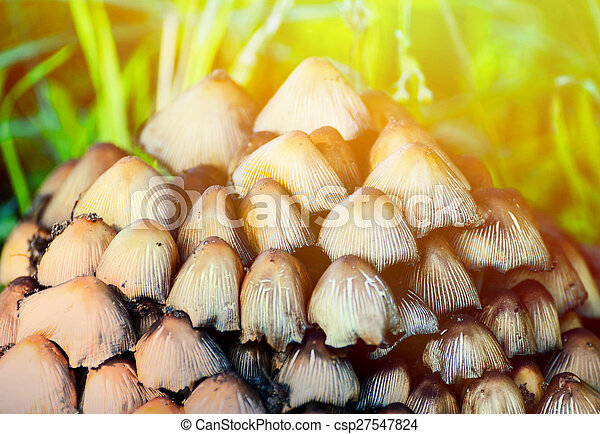 Group of mushrooms in forest - csp27547824