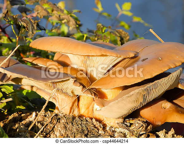 Group of mushrooms in the forest - csp44644214