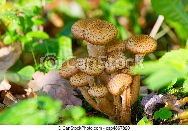 group of mushrooms - csp4867820