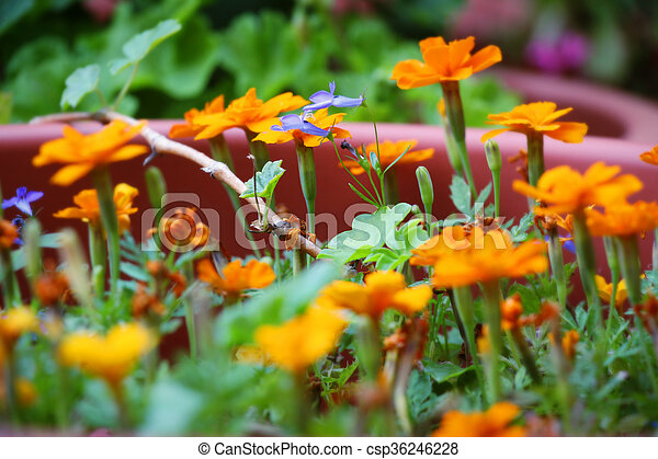 Group of orange flowers with a green stem in the garden - csp36246228