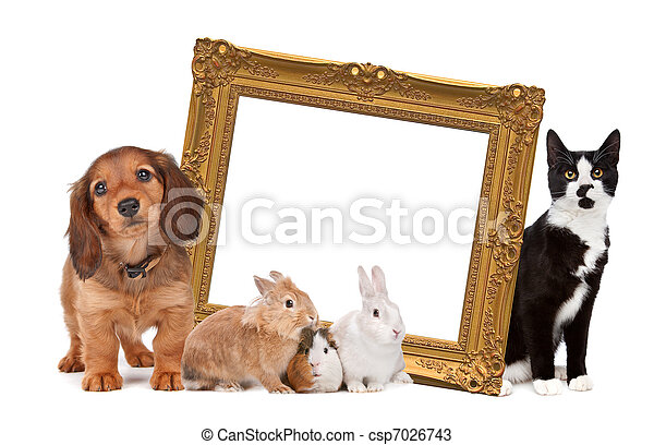 group of pets standing around a golden picture frame - csp7026743