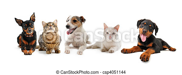 group of puppies and cats - csp4051144