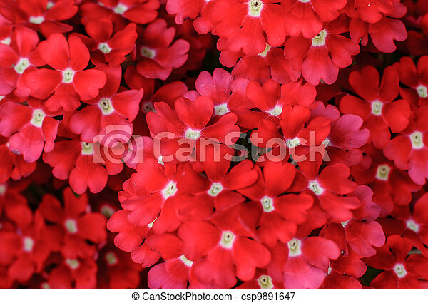 Group of red flowers background - csp9891647